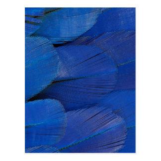 Blue Hyacinth Macaw Feather Design Postcard