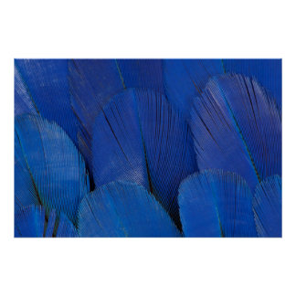 Blue Hyacinth Macaw Feather Design Poster