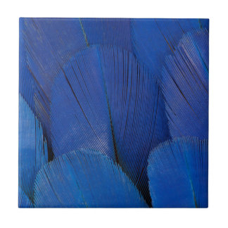 Blue Hyacinth Macaw Feather Design Tile