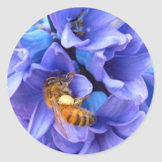 BLUE HYACINTH ~   Stickers