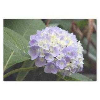 Blue Hydrangea 7636 Tissue Paper