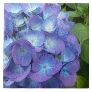 Blue Hydrangea Blossoms Floral Tile