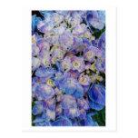 Blue Hydrangea Botanical Art Postcard