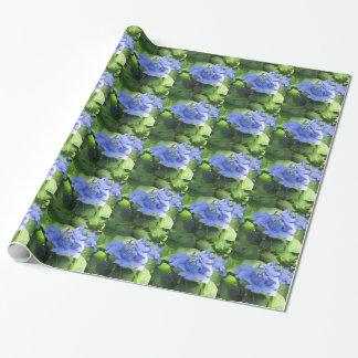 Blue Hydrangea flowers (Hydrangea macrophylla)