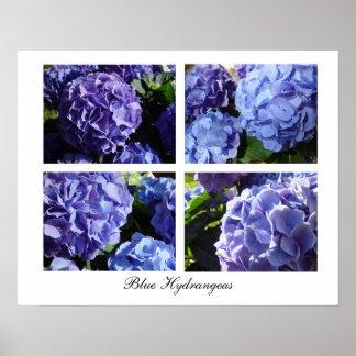 Blue Hydrangea mix, Blue Hydrangeas Poster