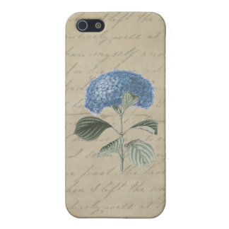 Blue Hydrangea on Vintage Calligraphy iPhone 5/5S Cover