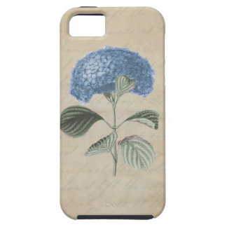 Blue Hydrangea on Vintage Calligraphy Paper iPhone 5 Case