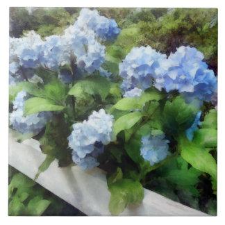 Blue Hydrangea on White Fence Tile