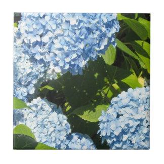 Blue Hydrangeas in the Sun Tile