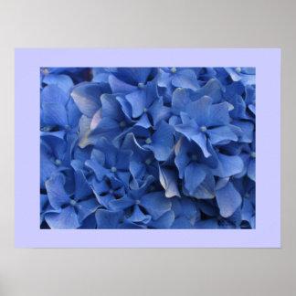 Blue Hydrangeas Print