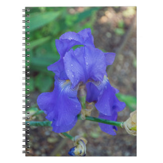 Blue iris flower notebook