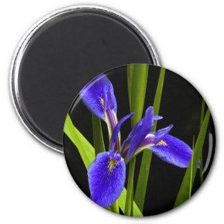 Blue Iris Magnet