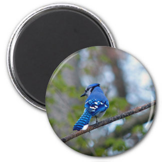 Blue Jay 2 Inch Round Magnet