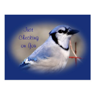 Blue Jay 8979- customize any occasion Postcard