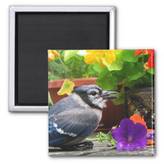 Blue Jay and Flowers Square Magnet