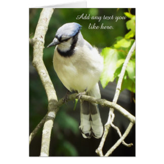 Blue jay Bird card
