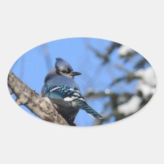 Blue Jay Bird in Winter Design Oval Sticker
