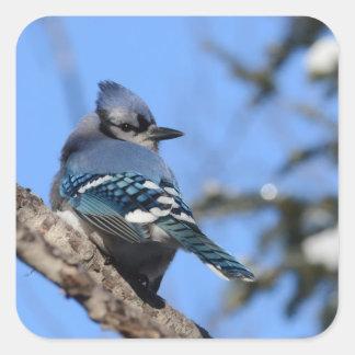 Blue Jay Bird in Winter Design Square Sticker