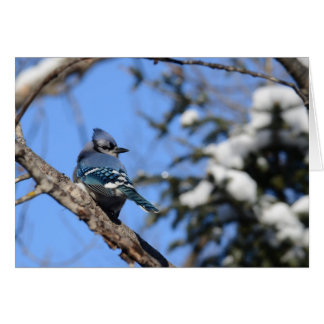 Blue Jay Bird in Winter Snow Blank Greeting Card