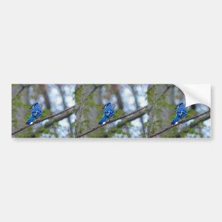 Blue Jay Bumper Sticker