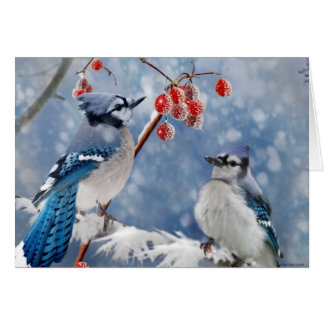 Blue Jay Christmas Greeting Card