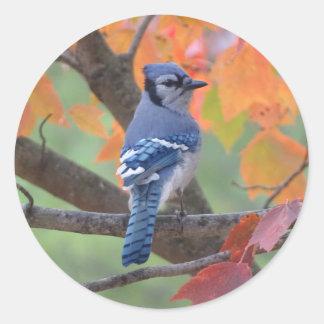 Blue Jay Classic Round Sticker