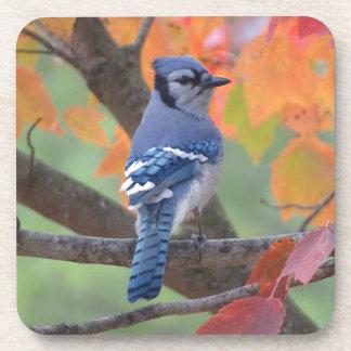 Blue Jay Coasters
