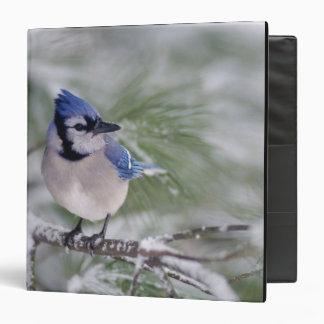 Blue Jay, Cyanocitta cristata Vinyl Binders
