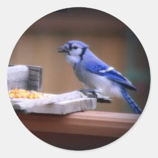 Blue Jay Eating Corn Round Sticker