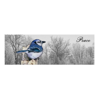 Blue Jay Forest Peace Poster