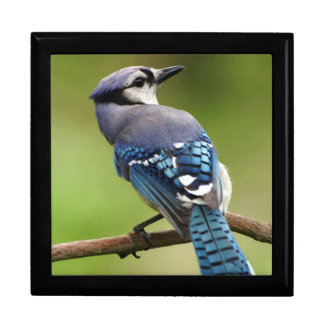 Blue jay gift box