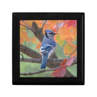 Blue Jay Gift Box