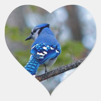 Blue Jay Heart Sticker