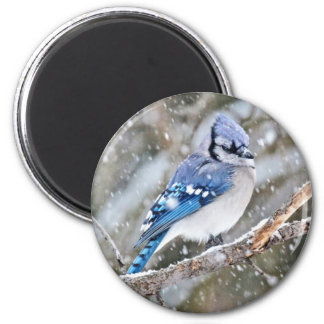 Blue Jay in a Snowstorm 2 Inch Round Magnet