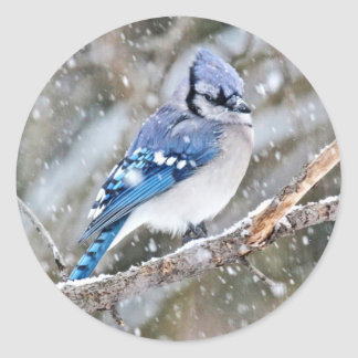 Blue Jay in a Snowstorm Classic Round Sticker
