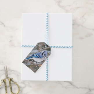 Blue Jay in a Snowstorm Gift Tags