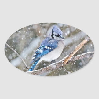 Blue Jay in a Snowstorm Oval Sticker