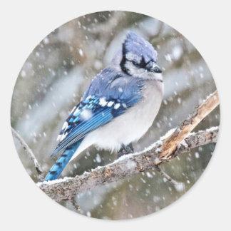 Blue Jay in a Snowstorm Round Sticker