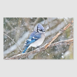 Blue Jay in a Snowstorm Sticker