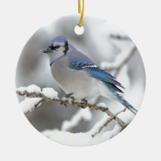 Blue Jay in Algonquin Park Ceramic Ornament