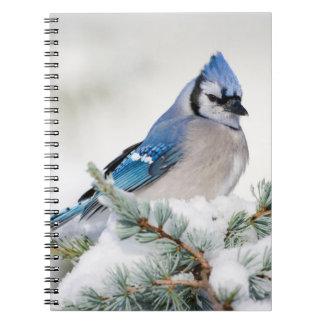 Blue Jay in Blue Atlas Cedar Notebook