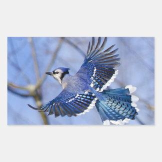 Blue Jay in Flight Sticker