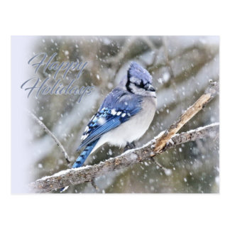 Blue Jay in Snow Christmas Holiday Postcard