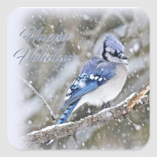 Blue Jay in Snow Christmas Holiday Square Sticker
