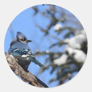 Blue Jay in Snow Round Sticker
