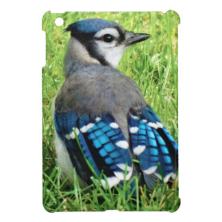 Blue Jay in the Grass Cover For The iPad Mini