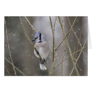 Blue Jay in the Snow Card