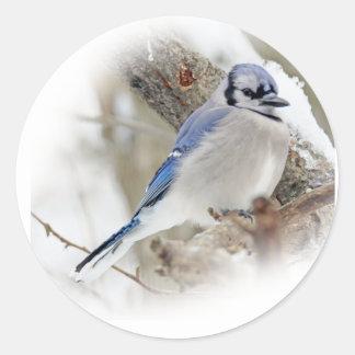 Blue Jay in Winter Snow Classic Round Sticker