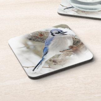 Blue Jay in Winter Snow Coaster
