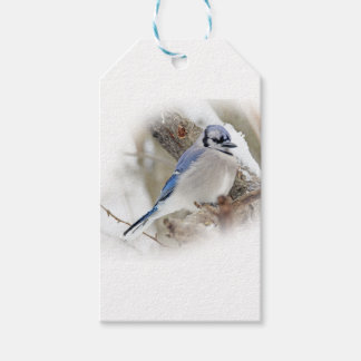Blue Jay in Winter Snow Gift Tags